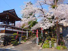 春の真照寺